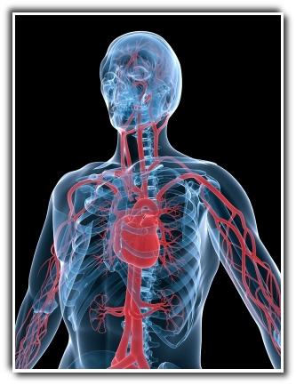 Enhance Blood Flow
