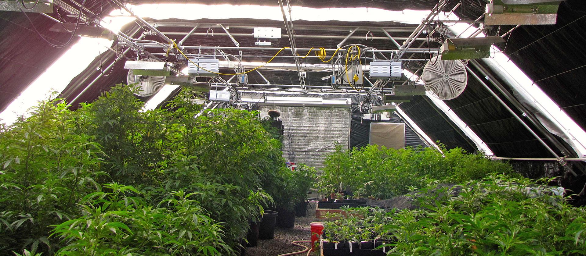 Cannabis greenhouse builder